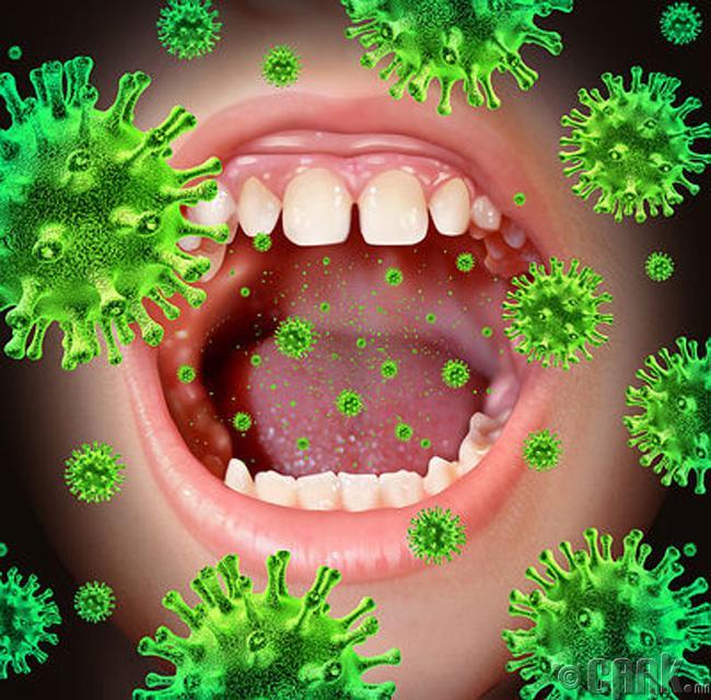 Аман дахь бактери хэд дахин үржинэ