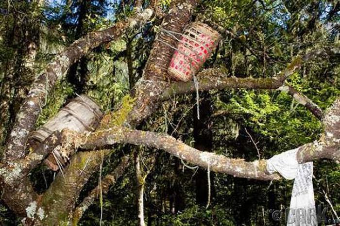 Модны оршуулга