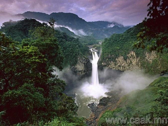 Амазонкийн ширэнгэн ойнууд