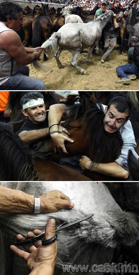 Рапа Дас Пестас: Морьтой барилдах фестивал (Испани, Галициа)