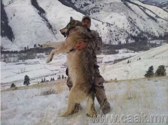Онцгой том чоно