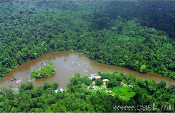 Ширэнгэн ой дун дахь орон- Суринам