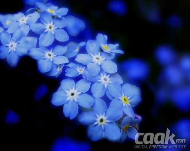 Хөх өнгө - Дэлхийн хүмүүсийн хамгийн дуртай өнгө.