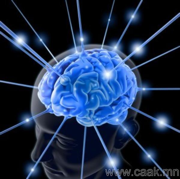 Хvмvvс тархиныхаа дєнгєж 10%-хан хувийг ашигладаг.