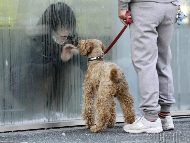 Цацраг идэвхит туяанаас болж түр хугацаанд тусгаарлагдсан Япон охин нохойтойгоо уулзаж байна.