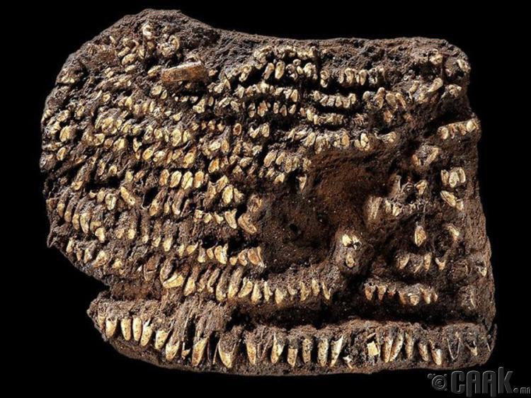 Эмэгтэй гар цүнх - 4500 жилийн настай