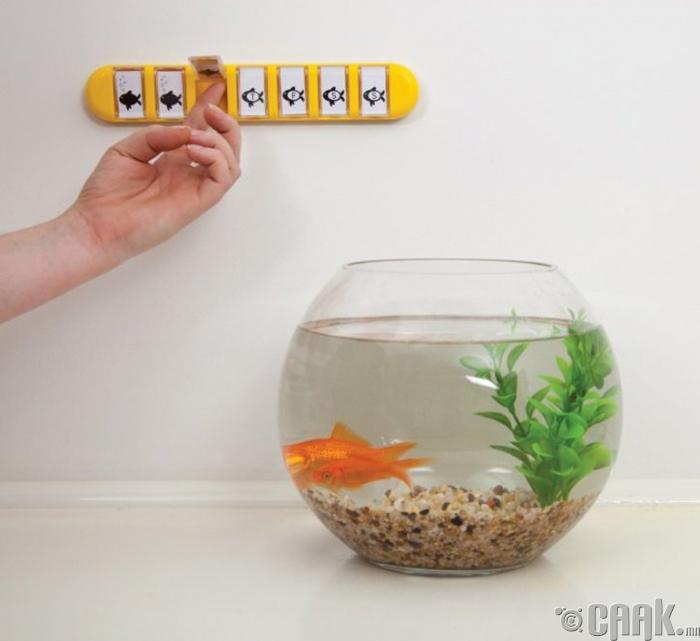Загасны хооллох өдрийг сануулах календар