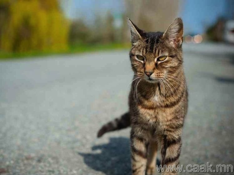 Муур – тэсрэх бөмбөг