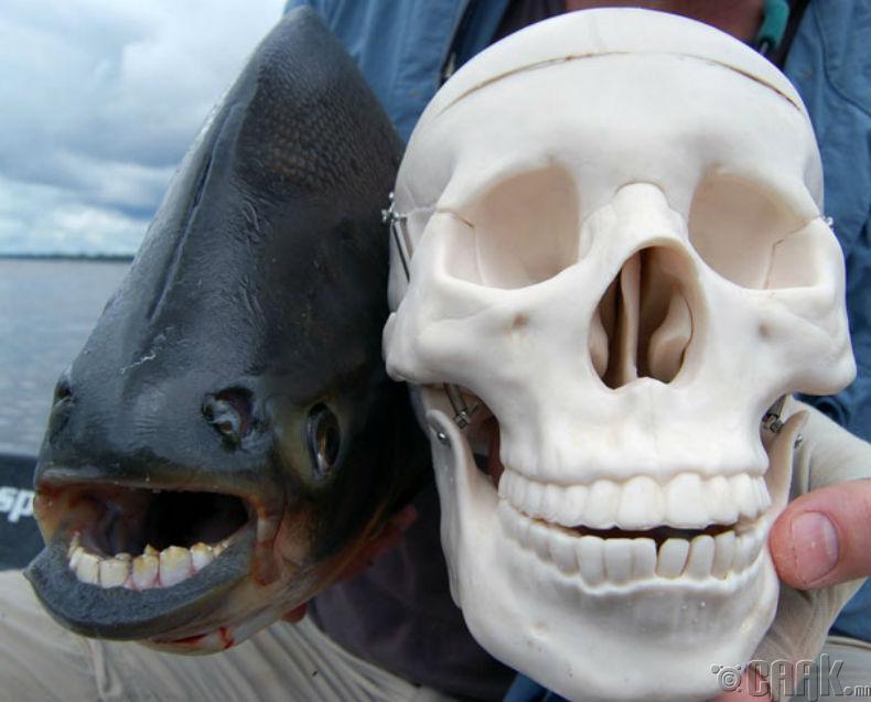 Хүн загас
