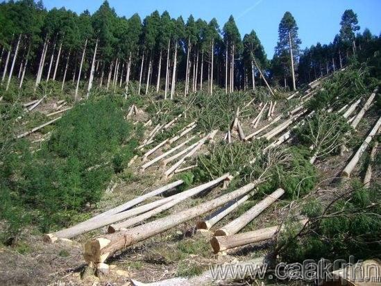 Мод тайрах