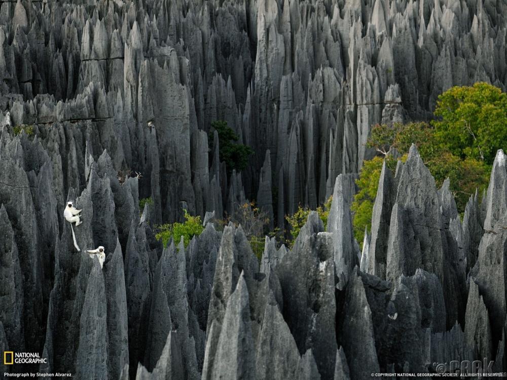 """""""Tsingy de Bemaraha"""" чулуун ой, Мадагаскар"""