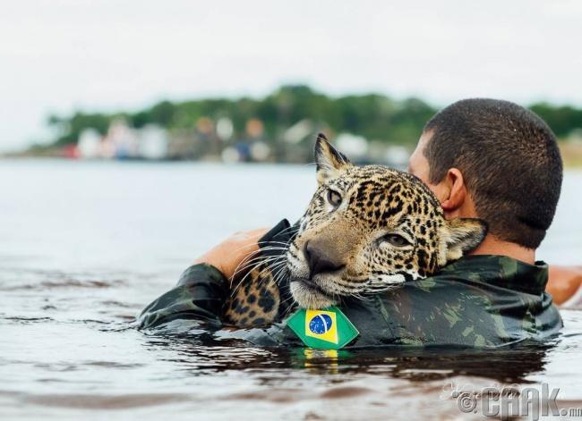 Бразилийн армийн цэрэг төөрсөн ирвэсийг үрчлэн авчээ