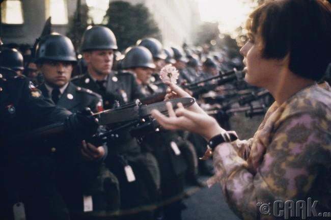 Вьетнамын дайны эсрэг бослого хөдөлгөөний үеэр залуу тэмцэгч Жейн Рөүз Кесмир (Jane Rose Kesmir) цагдаа нарын өөдөөс цэцэг гаргаж байгаа нь