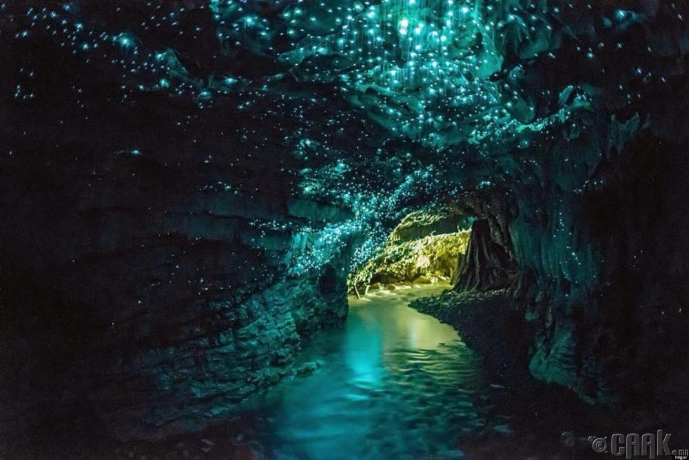 Гэрэлтдэг цохтой агуй, Шинэ Зеланд