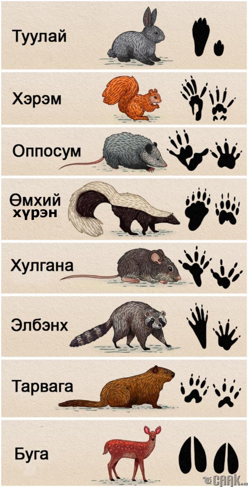 Хөлийн улаар нь амьтныг хэрхэн тодорхойлох вэ?
