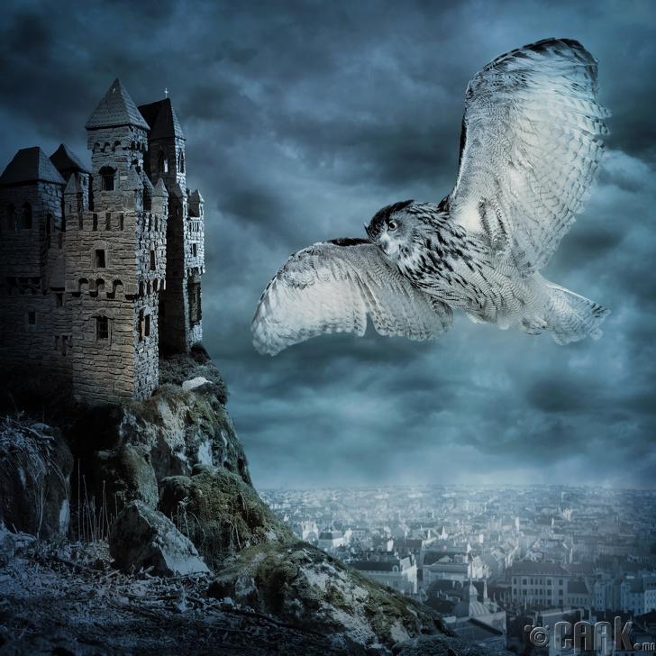 Шувууны аймгийн сүнс