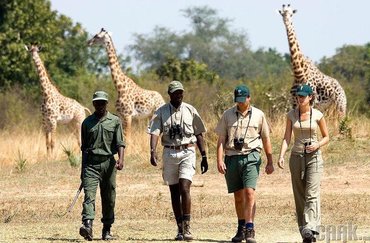 Амьтны хүрээлэн, Замби