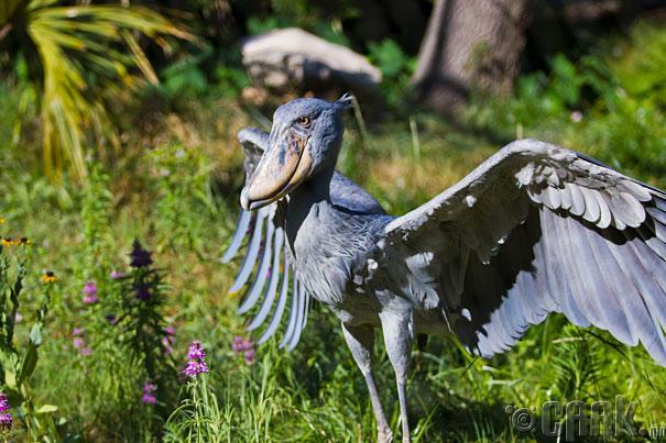 Египтийн шувуу