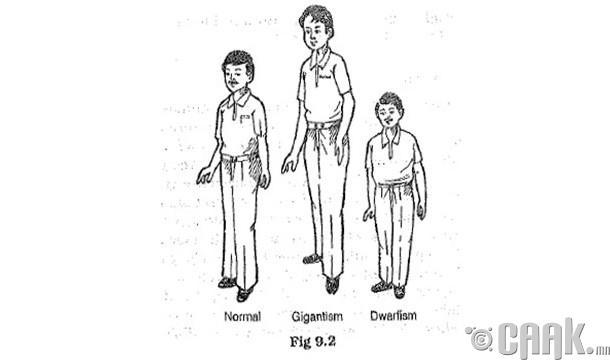 Хүүхдүүд зогсолтгүй өсдөг бол яах вэ?