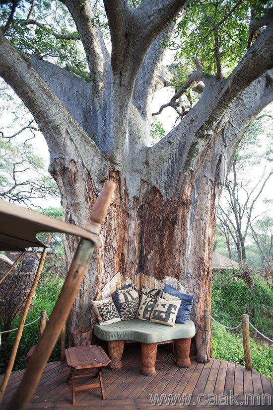 Нэгэн өвөрмөц модны дор маш сонирхолтой ном уншаад л...