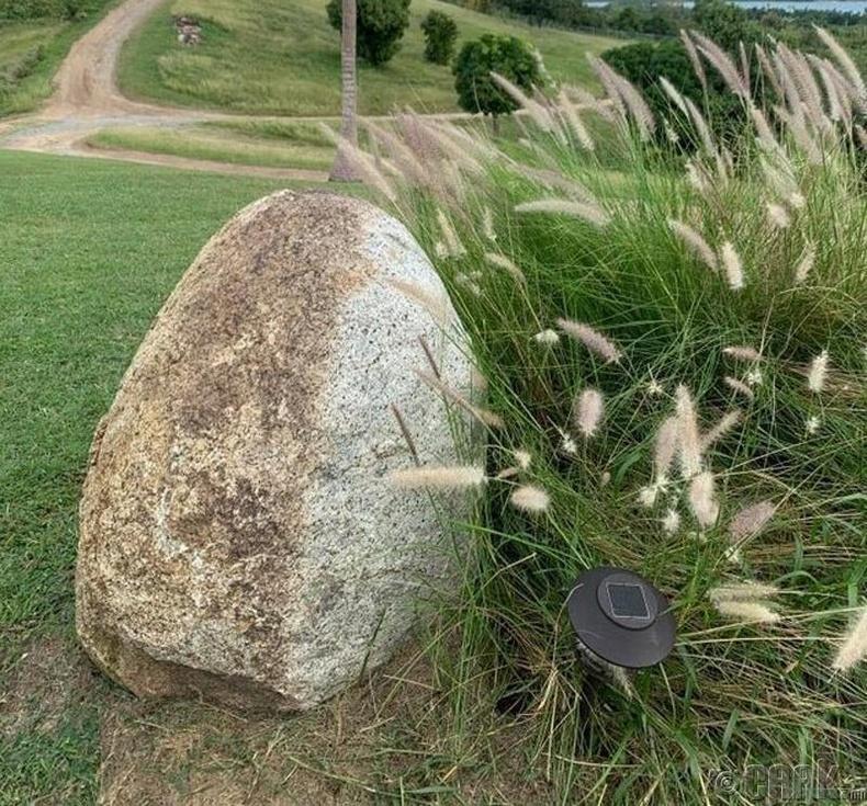 Салхинд найгах өвс чулууны нэг талыг олон жилийн турш цэвэрлэжээ