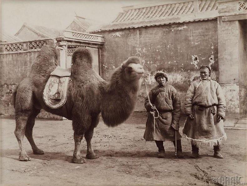 Монгол жинчид Бээжинд, 1900-аад он