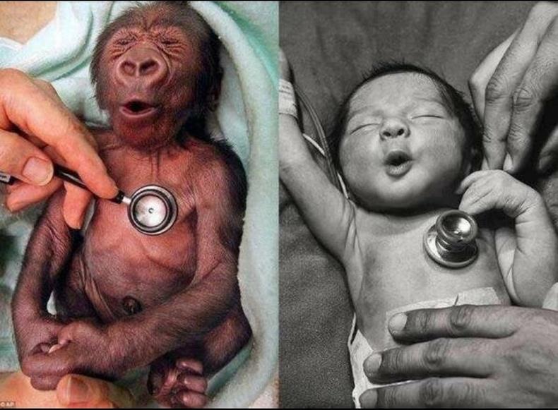 Хүйтэн чагнуур биед нь хүргэхэд хүүхэд ба гориллын монш ижилхэн хариу үйлдэл үзүүлдэг