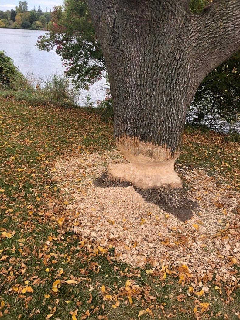 Минжний унагахыг оролдсон мод