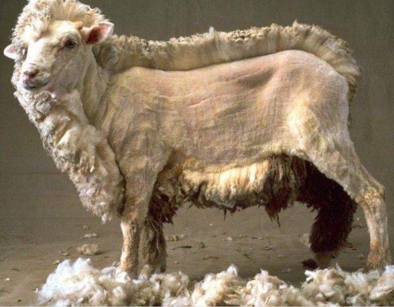 Хонь хяргах явцад
