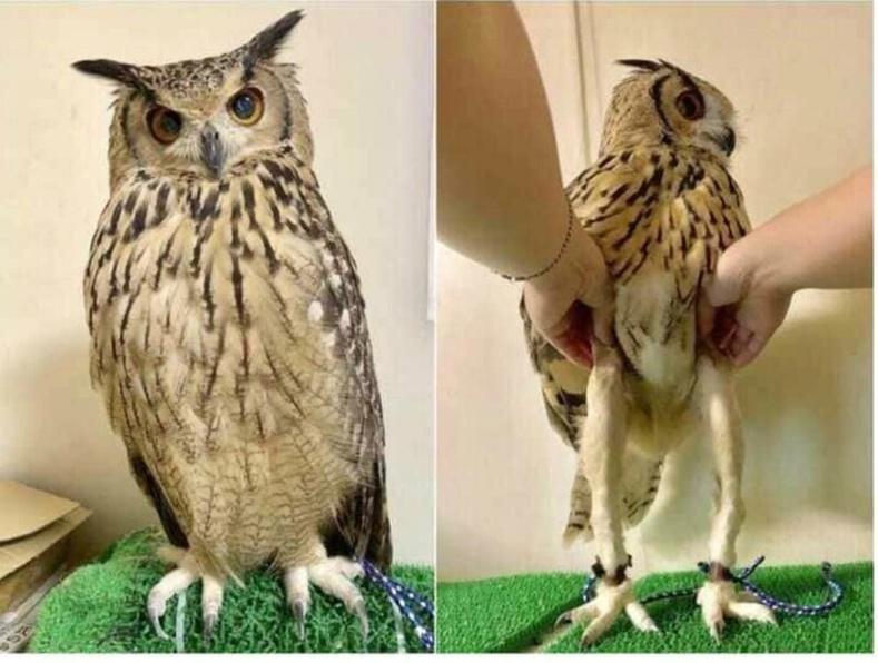 Шар шувуу ийм урт хөлтэй байдаг