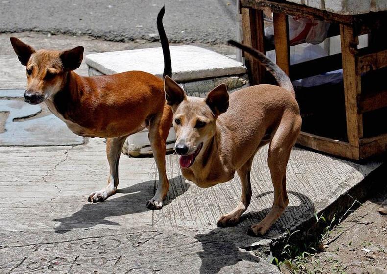 Төрөлхийн урд хөлгүй ах дүү хоёр нохой