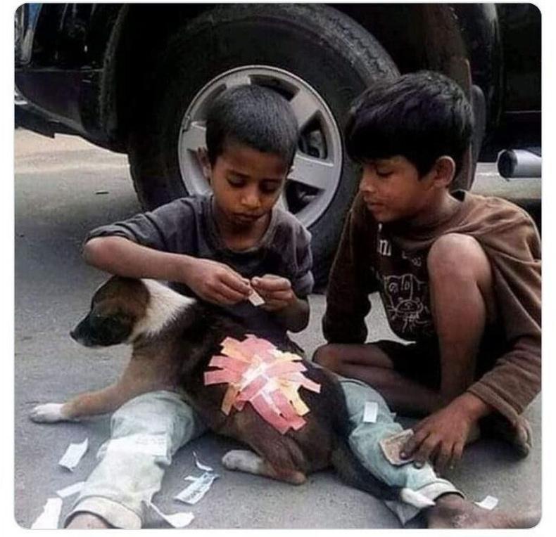 Энэтхэг хүүхдүүд өөрсдөө өмсөх гуталгүй хэр нь өвдсөн нохойд тусалж буй нь
