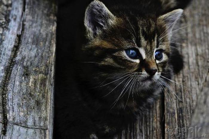 Муур сүнс хардаг