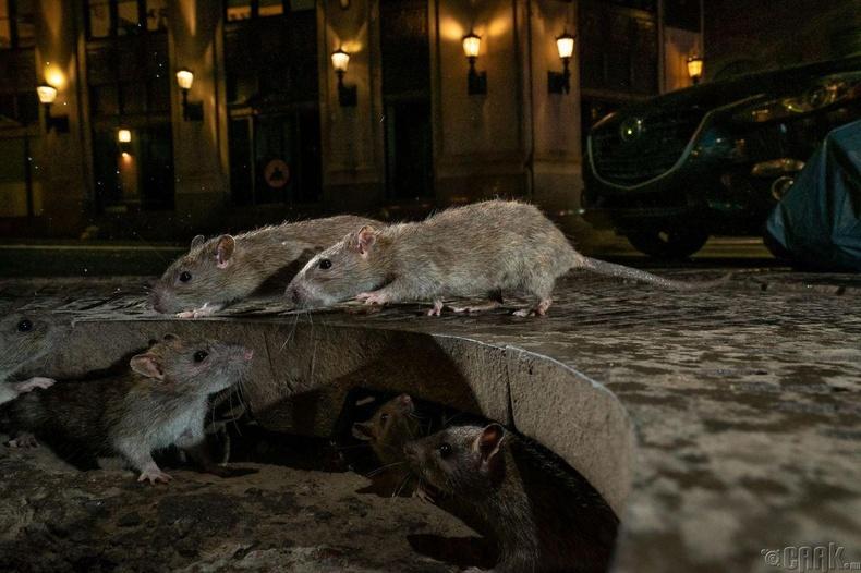 """""""Хотын ан амьтад"""" төрлийн шилдэг зураг"""