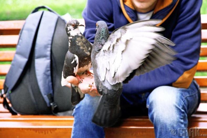 Шувуу хооллох