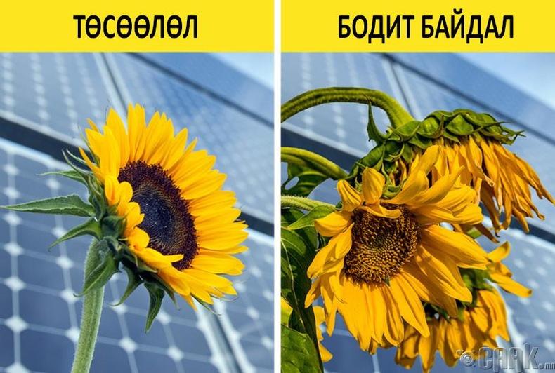 Бид бодохдоо: Нарны зай хураагуур хамгийн зөв шийдэл
