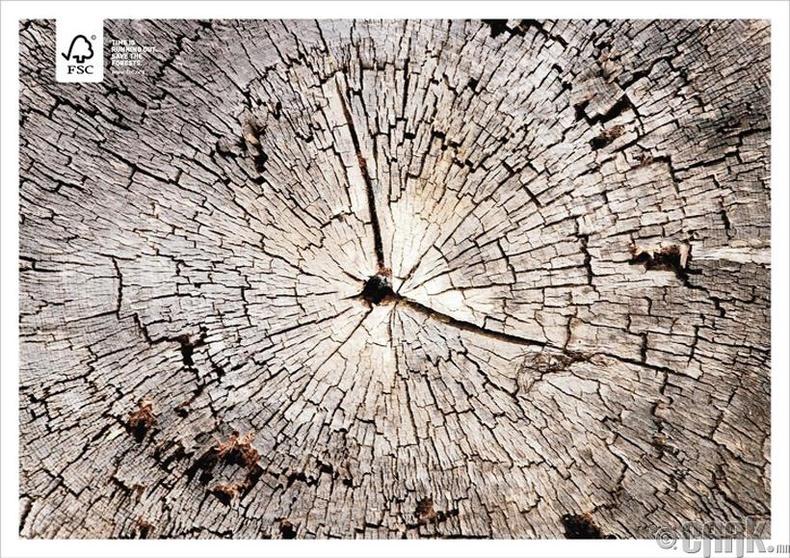 Цаг дуусч байна. Моддыг хамгаалцгаая.
