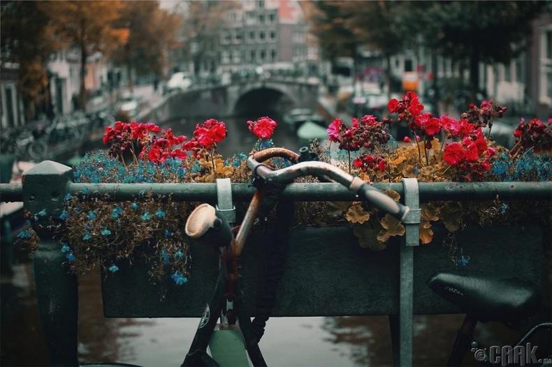 Недерланд