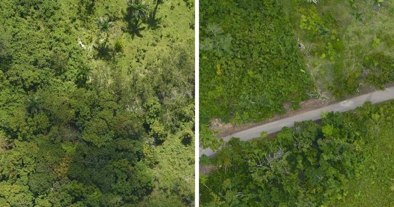 Пуэрто-Рикогийн ойд Мария хар салхины учруулсан хохирол