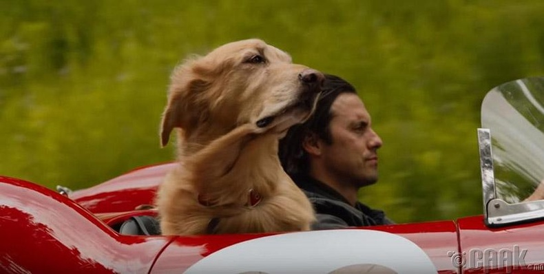 """The Art of Racing in the Rain"""