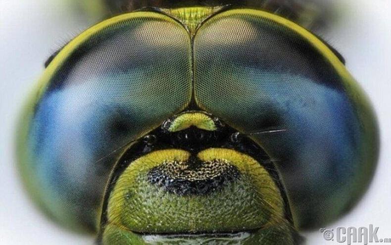 Сонын нүд хэдэн мянган жижиг нүднээс бүрдэх учир 360 градус харна