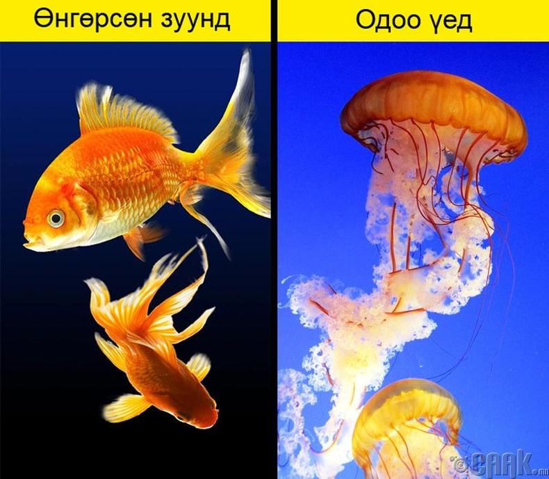 Цэлцэгнүүр загас үржүүлсэн нь