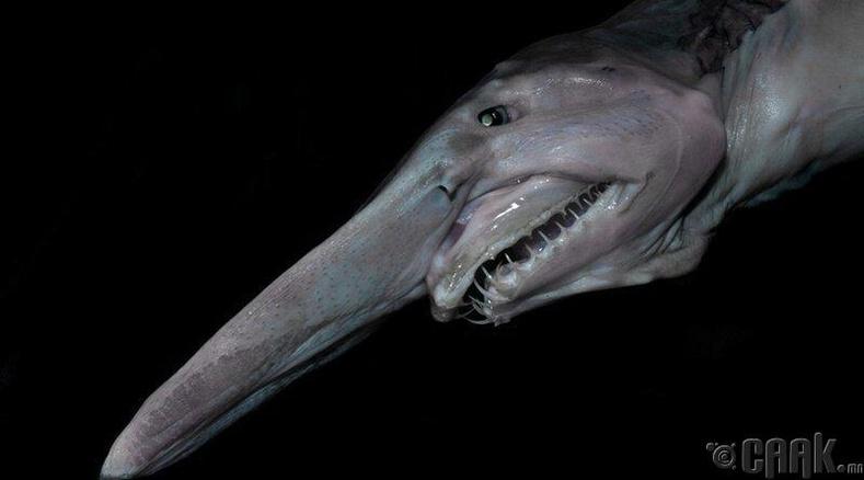 Хүн төрөхт аварга загас