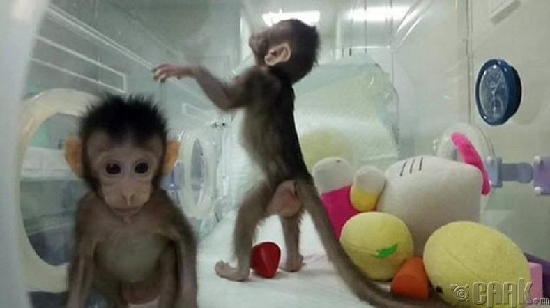 Хятадын анхны сармагчны колони