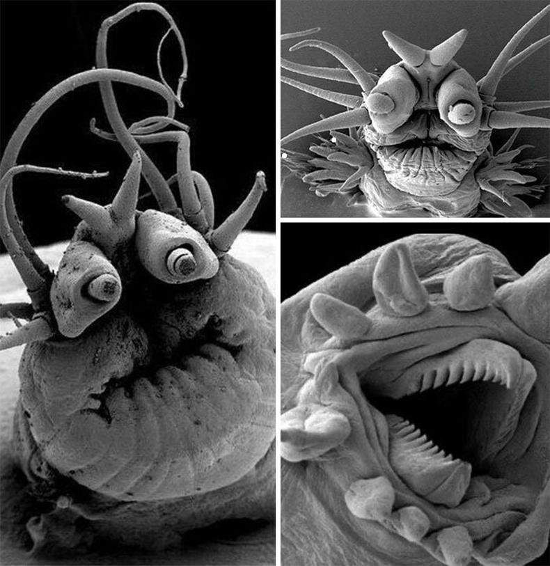 Далайн гүнд байдаг бичил хорхойнууд