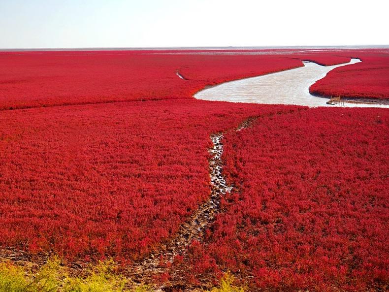 Панжины улаан эрэг - Хятад