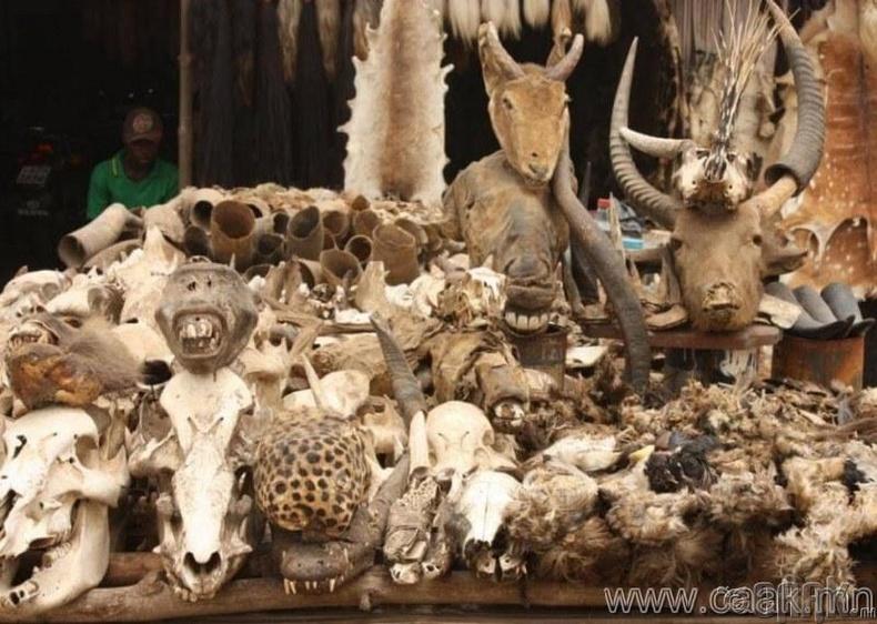 Того, Акодессэв дахь шүтээн сахиусын худалдаа