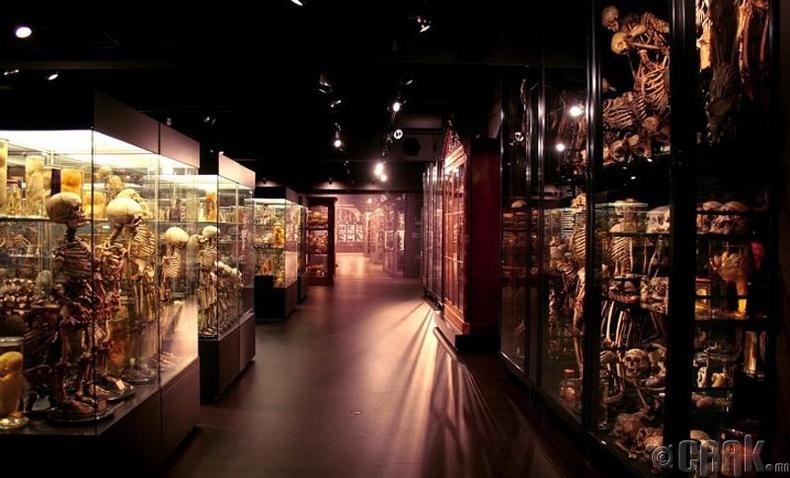 Вроликийн музей