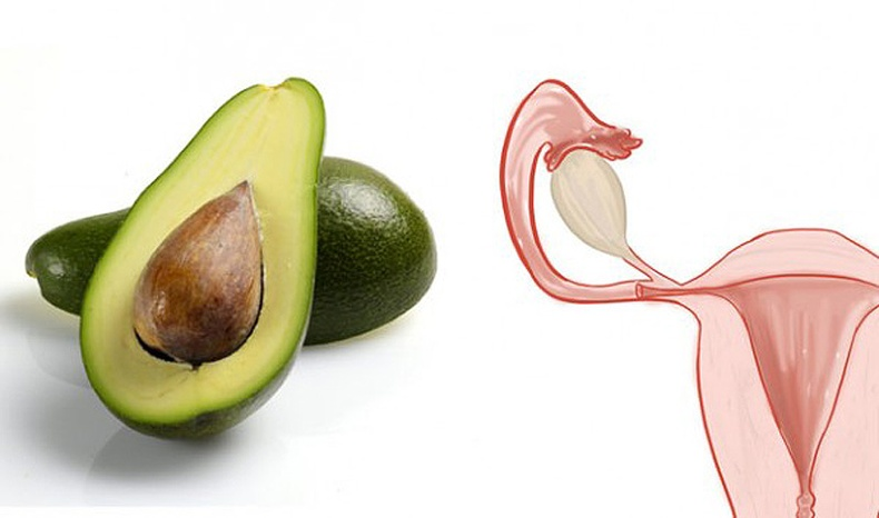 Авокадо - Умайн хүзүү