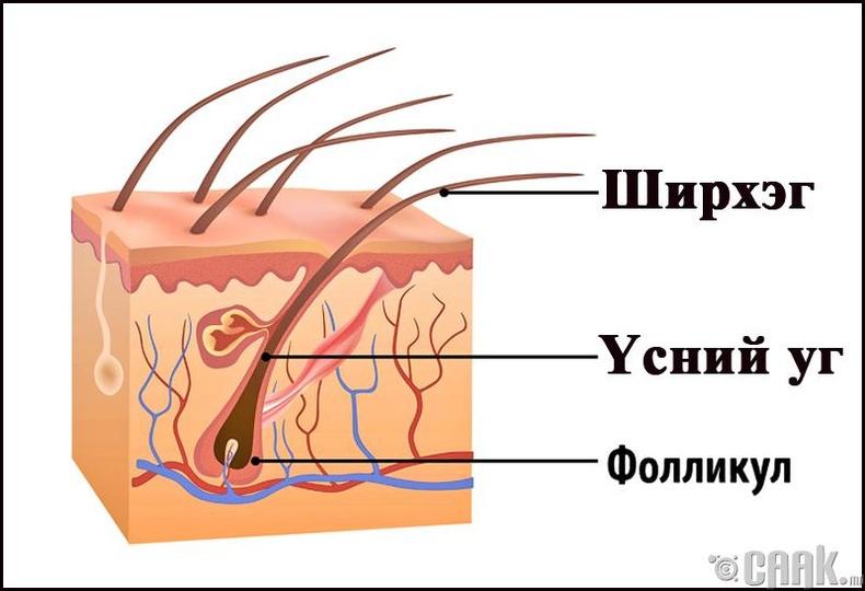 Таны үсний ургалт болон өтгөрөлтөд өдөр тутмын арчилгаа огтхон ч нөлөөлөхгүй